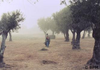 Ceci est une photo en approche de la villa romaine de Rabaçal avec le matériel !